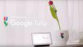 Google Tulip 1 april