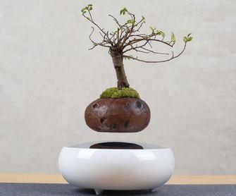 zwevende plant
