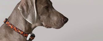 Delta smart systeem honden