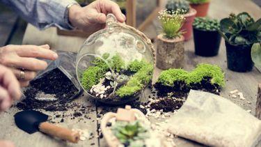 Plantterrarium
