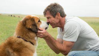 Netflix gaat A Dog's Purpose verwijderen