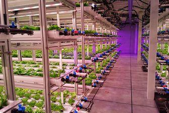 verticale landbouw WUR
