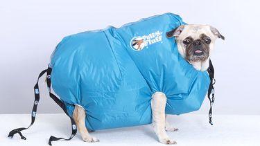 AliExpress hond