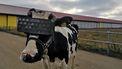 VR-bril koe