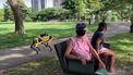 Singapore robothond coronacrisis