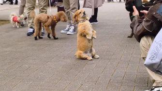 Netflix Dogs documentaireserie
