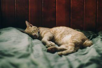 kat in bed wetenschappelijk onderzoek